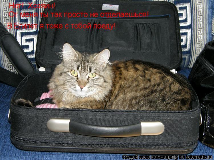 Котоматрица: Нет!  Хозяин!  От меня ты так просто не отделаешься! В Египет я тоже с тобой поеду!