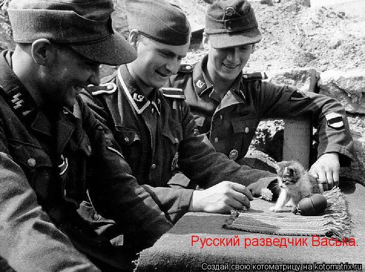 Котоматрица: Русский разведчик Васька.