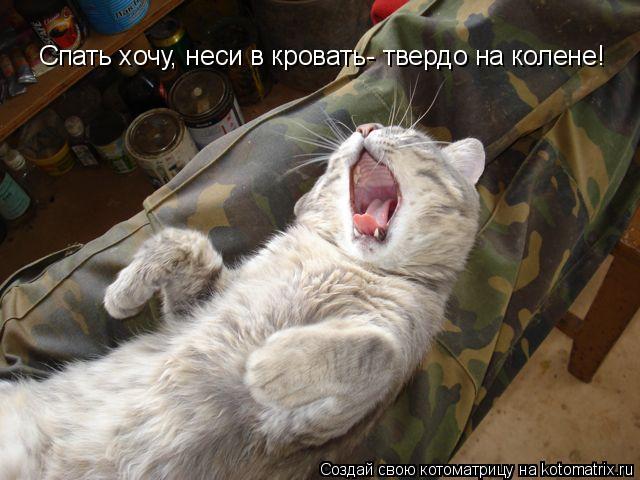 Котоматрица: Спать хочу, неси в кровать- твердо на колене!