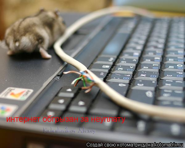 Котоматрица: интернет обгрызан за неуплату
