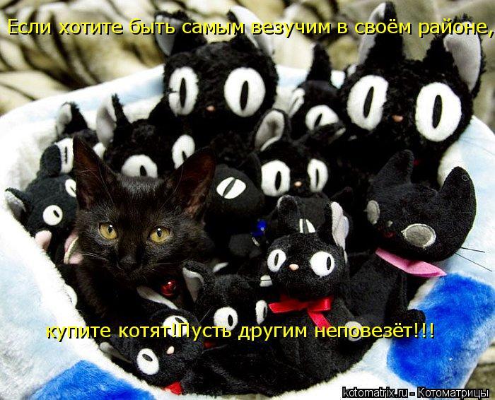Котоматрица: Если хотите быть самым везучим в своём районе,купите котят!Пусть другим неповезёт!!! купите котят!Пусть другим неповезёт!!!