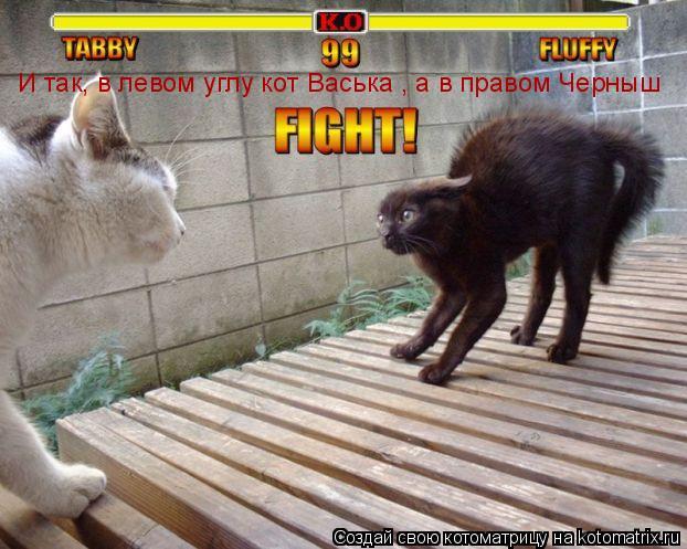 Котоматрица: И так, в левом углу кот Васька , а в правом Черныш