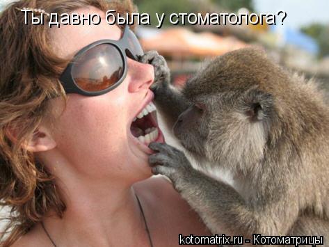 Котоматрица: Ты давно была у стоматолога?