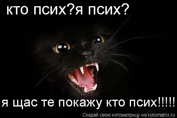 Котоматрица: кто псих?я псих? я щас те покажу кто псих!!!!!!!