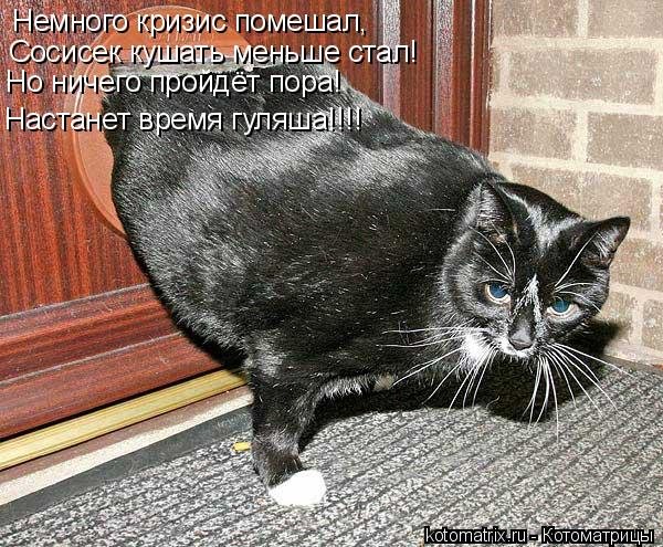 Котоматрица: Немного кризис помешал, Сосисек кушать меньше стал! Но ничего пройдёт пора! Настанет время гуляша!!!!