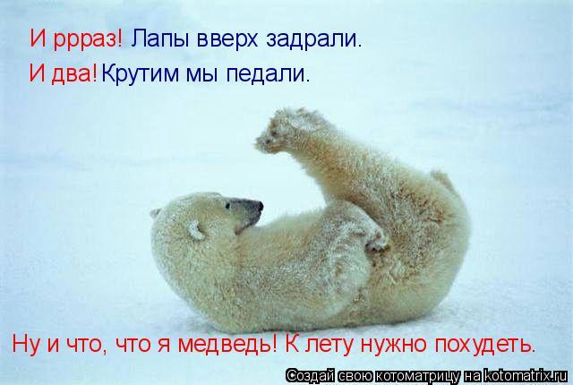 Котоматрица: И ррраз! Лапы вверх задрали. И два! Крутим мы педали. Ну и что, что я медведь! К лету нужно похудеть.