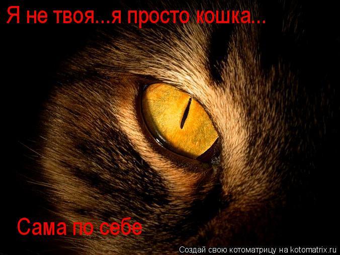 Котоматрица: Я не твоя...я просто кошка... Сама по себе