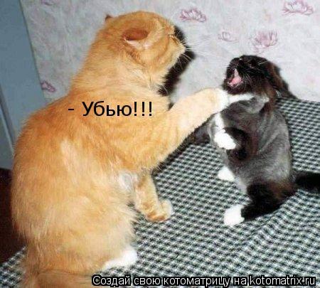 Котоматрица: - Убью!!!