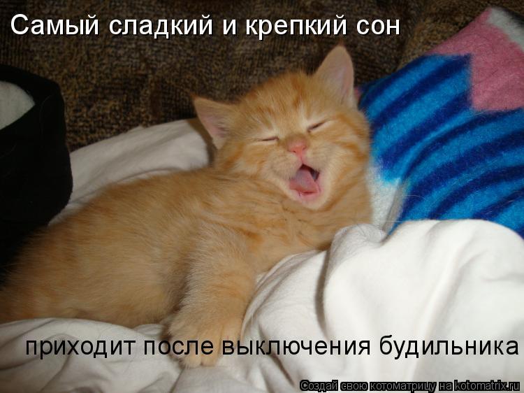Котоматрица: Самый сладкий и крепкий сон  приходит после выключения будильника