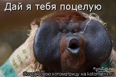 Котоматрица: Дай я тебя поцелую