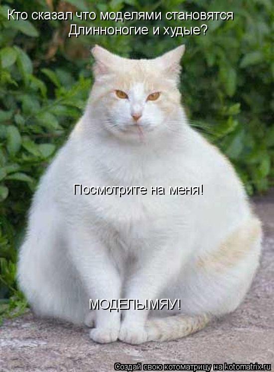 Котоматрица: Кто сказал что моделями становятся Длинноногие и худые? Посмотрите на меня! МОДЕЛЬ!МЯУ!