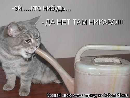 Котоматрица: -эй.....кто нибудь... - ДА НЕТ ТАМ НИКАВО!!!