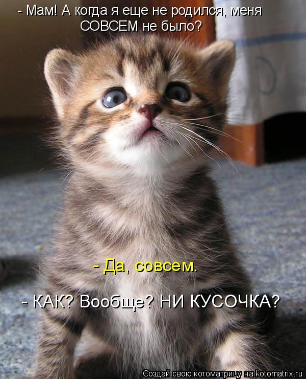 Котоматрица: - Мам! А когда я еще не родился, меня СОВСЕМ не было? - Да, совсем. - КАК? Вообще? НИ КУСОЧКА?