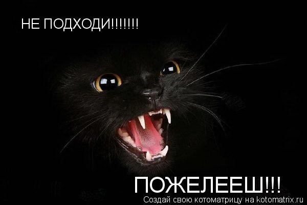 Котоматрица: НЕ ПОДХОДИ!!!!!!! ПОЖЕЛЕЕШ!!!