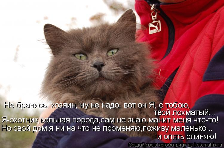 Котоматрица: Не бранись, хозяин, ну не надо, вот он Я, с тобою, твой лохматый... Я-охотник,вольная порода,сам не знаю,манит меня что-то! Но свой дом я ни на что