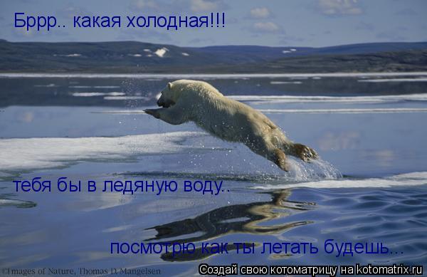 Котоматрица: Бррр.. какая холодная!!!  тебя бы в ледяную воду..  посмотрю как ты летать будешь...
