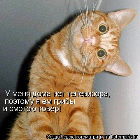 Котоматрица: У меня дома нет телевизора, поэтому я ем грибы и смотрю ковёр!