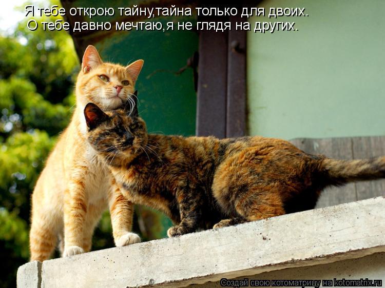Котоматрица: Я тебе открою тайну,тайна только для двоих. О тебе давно мечтаю,я не глядя на других.