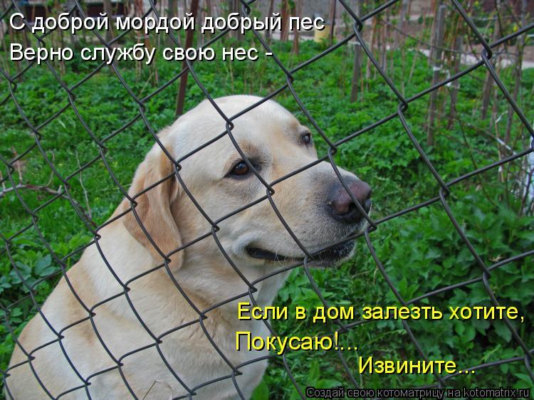 Котоматрица: С доброй мордой добрый пес Верно службу свою нес -  Если в дом залезть хотите, Покусаю!...  Извините...