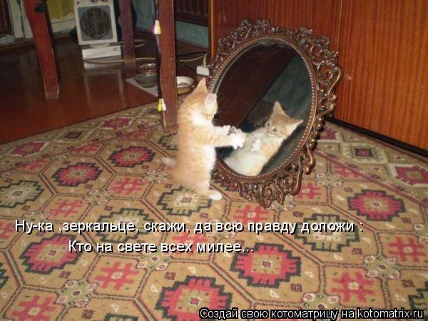 Котоматрица: Ну-ка ,зеркальце, скажи, да всю правду доложи : Кто на свете всех милее...