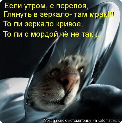 Котоматрица: Если утром, с перепоя, Глянуть в зеркало- там мрак!!! То ли зеркало кривое, То ли с мордой чё не так...