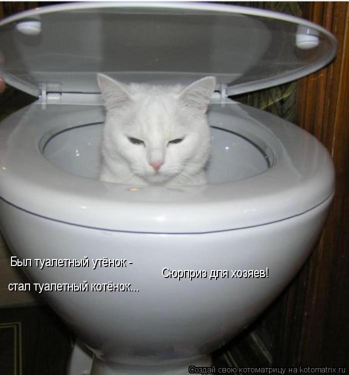 Котоматрица: Был туалетный утёнок -  стал туалетный котёнок...  Сюрприз для хозяев!