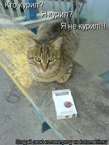 Котоматрица: Кто курил? Я курил? Я не курил!!!