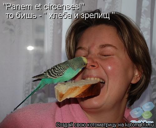 """Котоматрица: """"Panem et circenses!"""" то бишь - """" хлеба и зрелищ """""""
