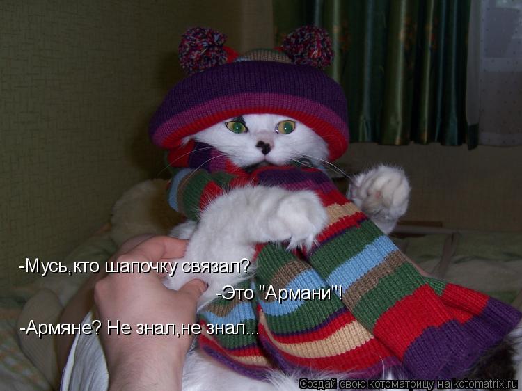 """Котоматрица: -Мусь,кто шапочку связал?  -Это """"Армани""""!  -Армяне? Не знал,не знал..."""