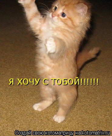 Котоматрица: Я ХОЧУ С ТОБОЙ!!!!!!