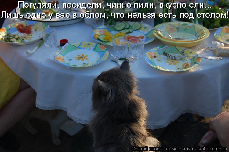 Котоматрица: Погуляли, посидели, чинно пили, вкусно ели... Лишь одно у вас в облом, что нельзя есть под столом!!!