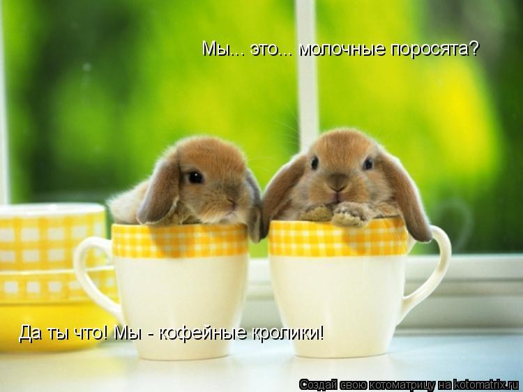 Котоматрица: Мы... это... молочные поросята? Да ты что! Мы - кофейные кролики!