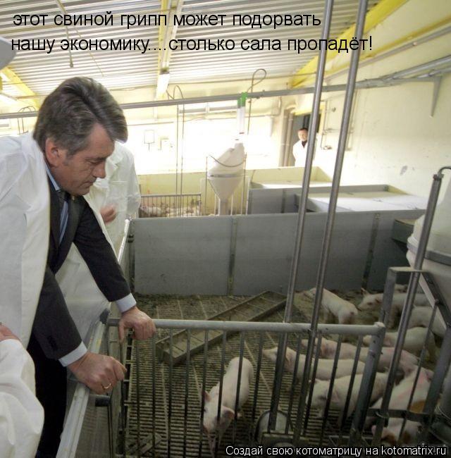 Котоматрица: этот свиной грипп может подорвать  нашу экономику....столько сала пропадёт!