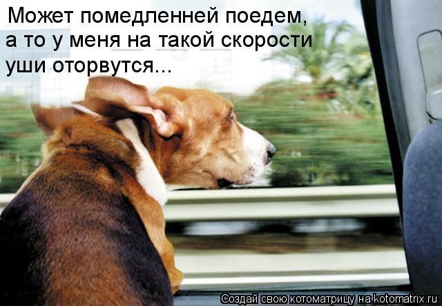 Котоматрица: Может помедленней поедем,  а то у меня на такой скорости  уши оторвутся...
