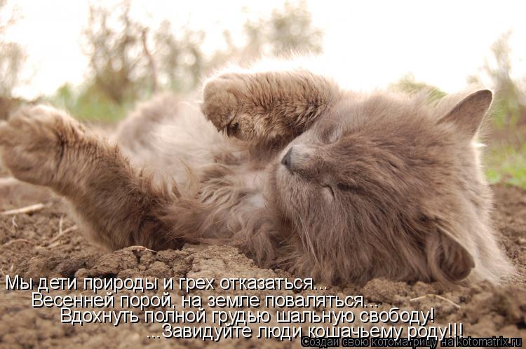 Котоматрица: Мы дети природы и грех отказаться... Весенней порой, на земле поваляться... Вдохнуть полной грудью шальную свободу! ...Завидуйте люди кошачьем