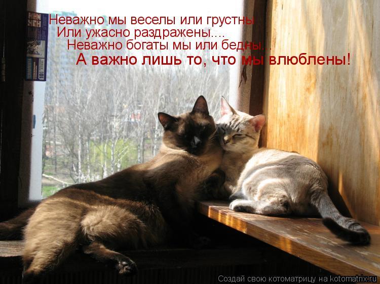 Котоматрица: Неважно мы веселы или грустны Или ужасно раздражены.... Неважно богаты мы или бедны... А важно лишь то, что мы влюблены!