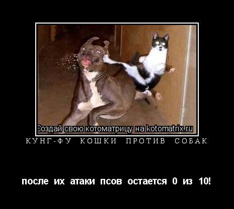 Котоматрица: кунг-фу  кошки  против  собак после  их  атаки  псов  остается  0  из  10!