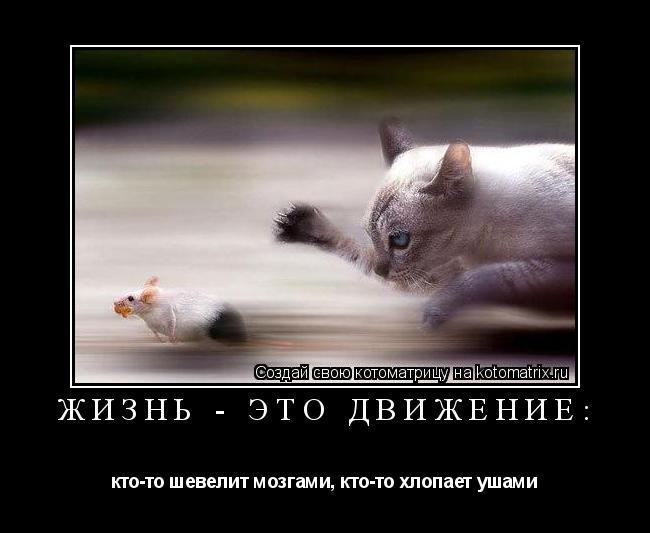фото жизнь это движение