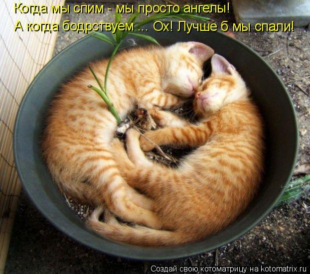 Котоматрица: Когда мы спим - мы просто ангелы! А когда бодрствуем ... Ох! Лучше б мы спали!