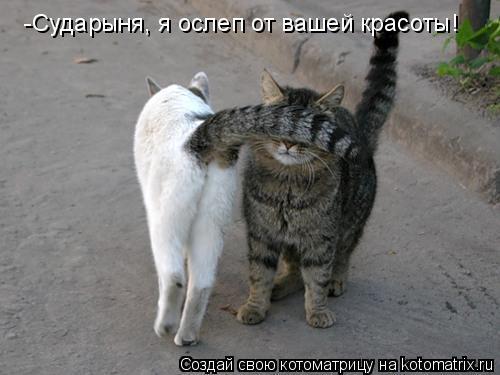 Котоматрица: -Сударыня, я ослеп от вашей красоты!
