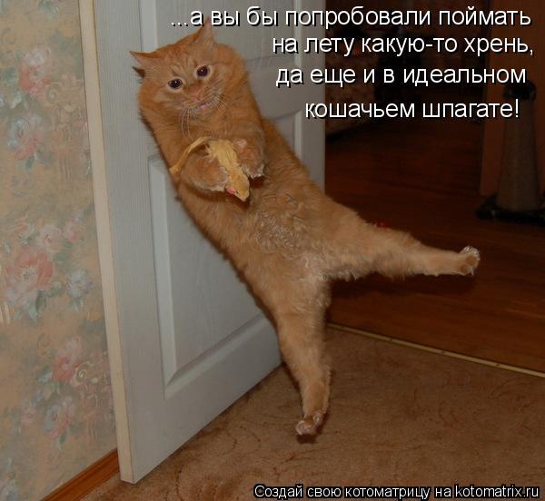 Котоматрица: ...а вы бы попробовали поймать  на лету какую-то хрень, да еще и в идеальном кошачьем шпагате!