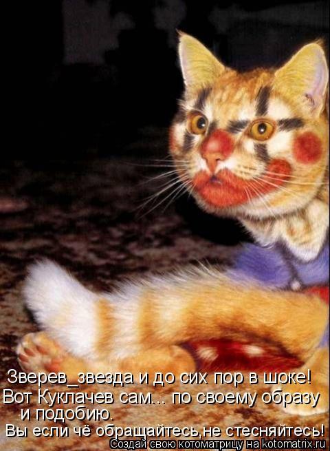Котоматрица: Зверев_звезда и до сих пор в шоке! Вот Куклачев сам... по своему образу  и подобию. Вы если чё обращайтесь,не стесняйтесь!