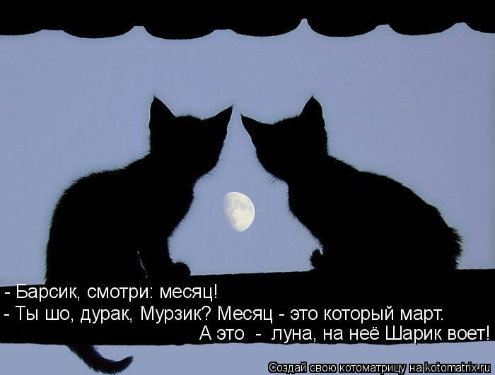 Котоматрица: - Барсик, смотри: месяц! - Ты шо, дурак, Мурзик? Месяц - это который март. А это  -  луна, на неё Шарик воет!