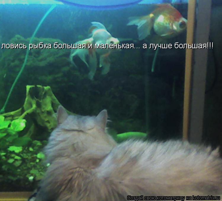 Котоматрица: ловись рыбка большая и маленькая... а лучше большая!!!