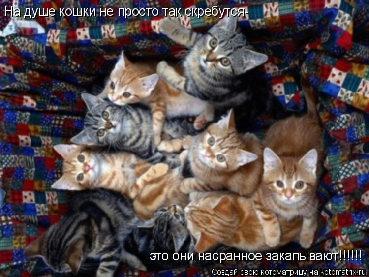 Котоматрица: На душе кошки не просто так скребутся- это они насранное закапывают!!!!!!