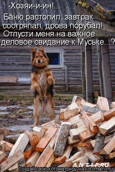 Котоматрица: -Хозяи-и-ин!... Баню растопил, завтрак  состряпал, дрова порубал! Отпусти меня на важное  деловое свидание к Муське...?