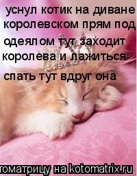 Котоматрица: уснул котик на диване королевском прям под одеялом тут заходит  королева и лажиться  спать тут вдруг она