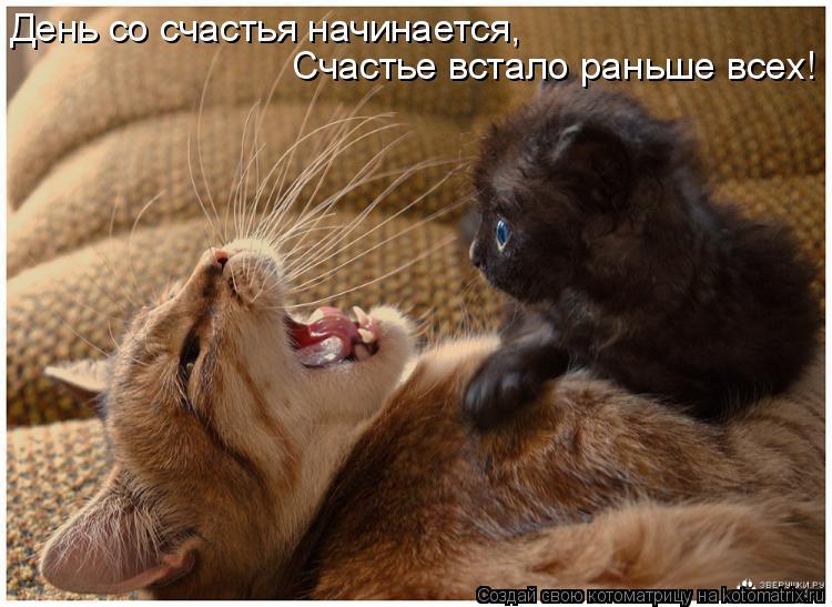 Котоматрица: День со счастья начинается, Счастье встало раньше всех!