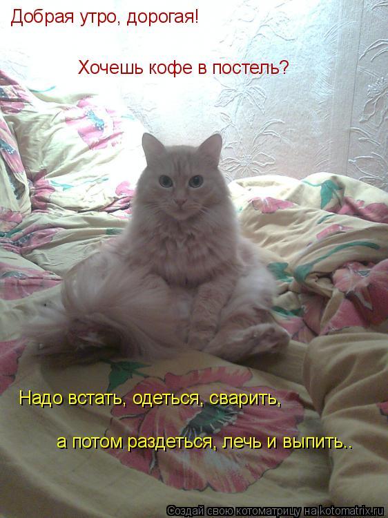 Котоматрица: Добрая утро, дорогая! Хочешь кофе в постель? Надо встать, одеться, сварить, а потом раздеться, лечь и выпить….