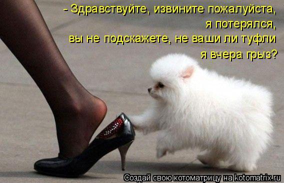 Котоматрица: - Здравствуйте, извините пожалуйста, я потерялся, вы не подскажете, не ваши ли туфли я вчера грыз?